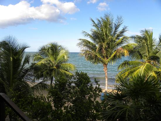 Jungle Jeanie's by the Sea : View from Tree house