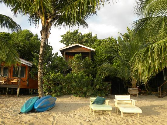 Jungle Jeanie's by the Sea : Tree house