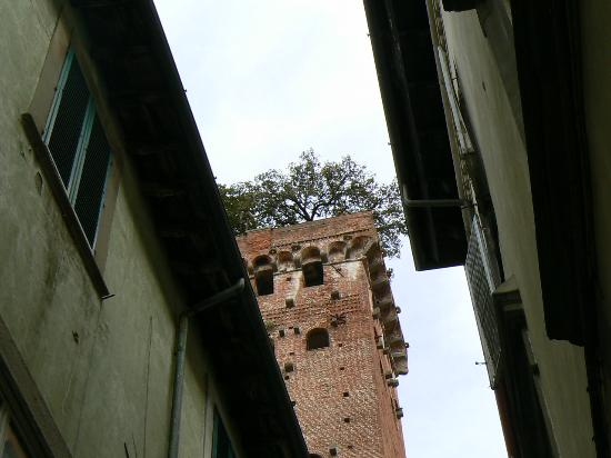 Look up for the Guinigi tower