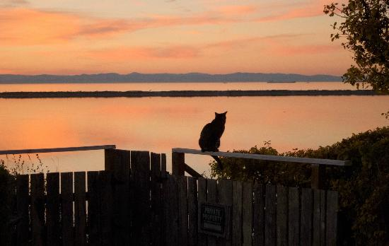 The Dungeness Barn House Bed and Breakfast: Cat sitting on the steps that lead to Dungeness Bay