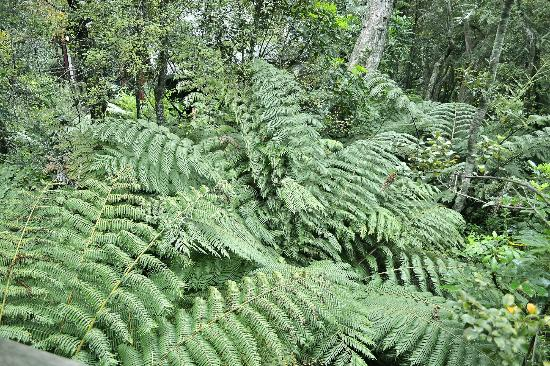 Grand Mercure Puka Park Resort: Ferns