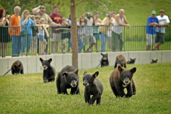 写真Bear Country USA枚