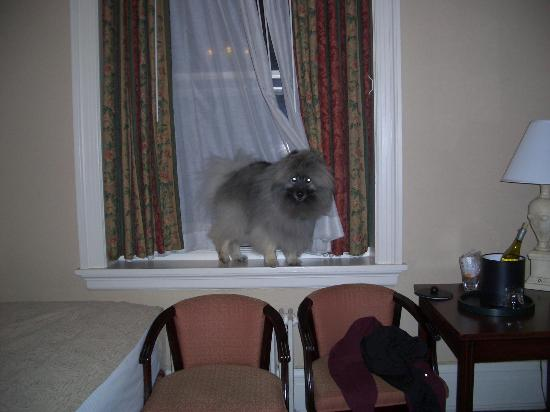Hotel Colorado: Patrick, our Keeshond, making himself at home in our room!