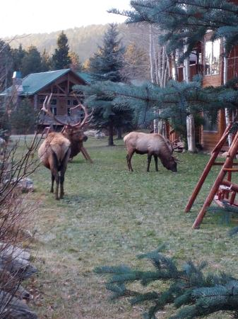 River Stone Resort and Bear Paw Suites: Elk beside the creek.