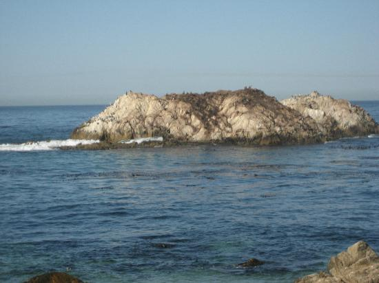 Monterey Movie Tours: Bird Rock - one of our stops during the tour - close to the Spyglass Golf Course