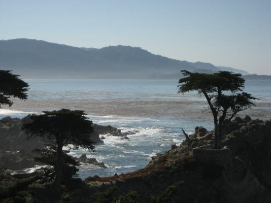 Monterey Movie Tours: The Lone Cypress - Icon for Pebble Beach - one of our stops