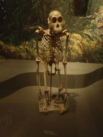 Swedish Museum of Natural History: distant cousin