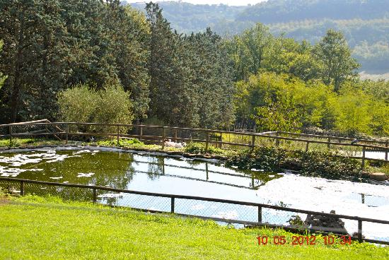Torraccia di Chiusi: pond below the parking area