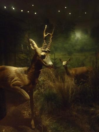 Museo Sueco de Historia Natural: more swedish animals