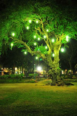 Matabungkay Beach Resort & Hotel: at night