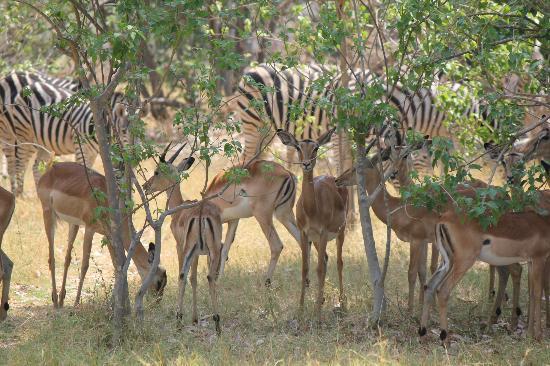 写真Sango Safari Camp枚