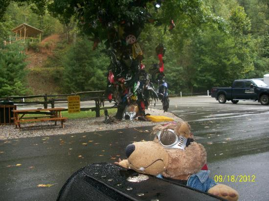 Deal's Gap Motorcycle Resort : View from the room of the Tree of Shame!