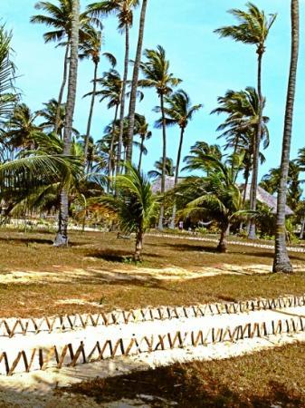 Rancho do Peixe: coqueiral