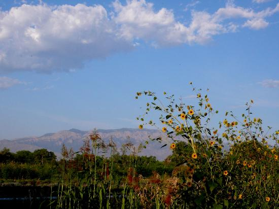 Los Poblanos Historic Inn & Organic Farm: Mountain Views