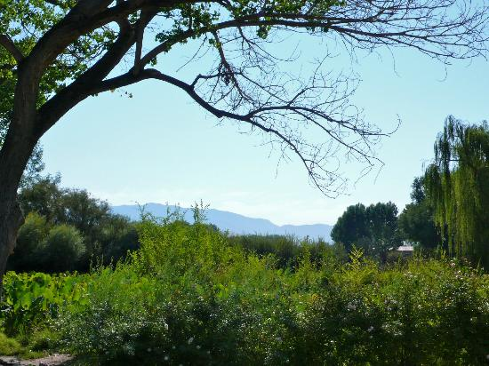 Los Poblanos Historic Inn & Organic Farm: View of mountains from the grounds