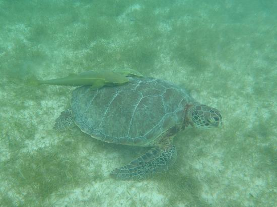 Sandos Playacar Beach Resort 사진