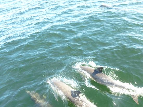 Capt. Dave's Dolphin & Whale Watching Safari: Flipper and friends...many friends!
