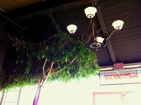 Mendocino Hotel and Garden Suites: Two ficus trees grow inside the cafe.
