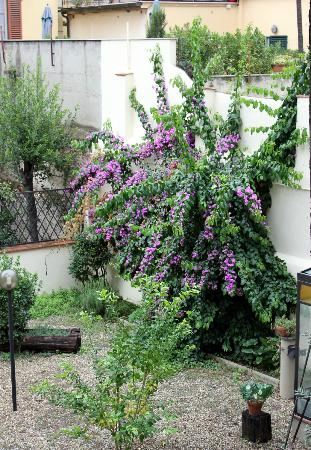 Hotel Il Bargellino: Terrace plants