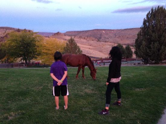 Kah-Nee-Ta Resort & Spa: Grandson loved the wild horses