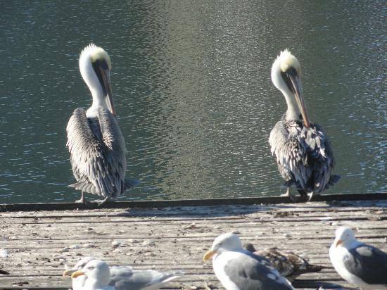 Oakland, CA: Várias especies de animais no lago