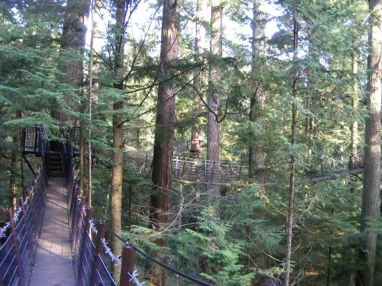Capilano Suspension Bridge Park: The Treetops Adventure lets you get up close and personal