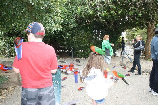 Southern Cross 4WD Tours : Bird feeding at O' Reilly's