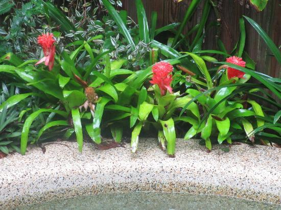 Clifton Beach Retreat: Bromiliads by the pool