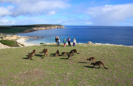 Emu Bay Kangaroo Island Restaurants