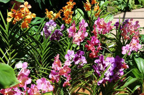 Orchid Garden Picture Of Singapore Botanic Gardens