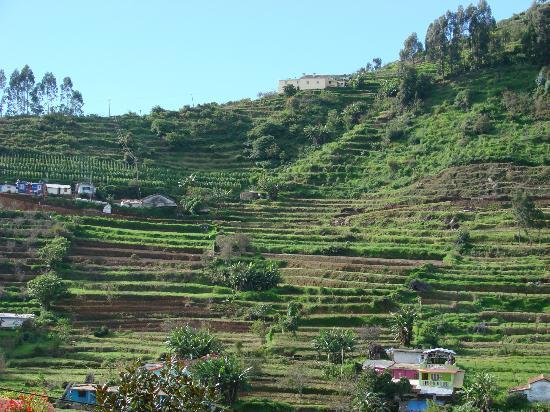 Sterling Kodai Valley: Terrace cultivation...