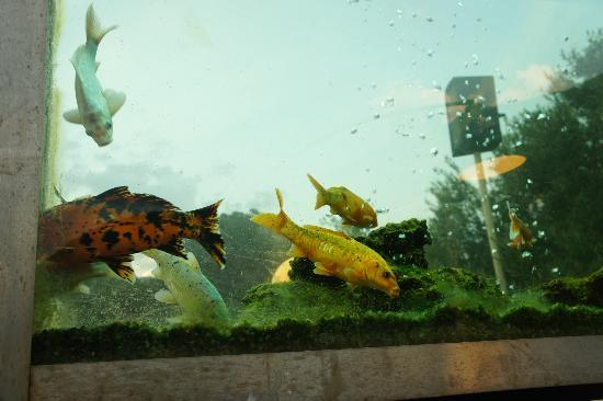 Jade Terrace Food & Drink: Stunning fish tank on the terrace