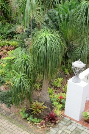 St. Lucia Wetlands Guesthouse: beautiful ferns, bromeliads and orchids in the garden