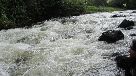 Aberdare Cottages Dream: river
