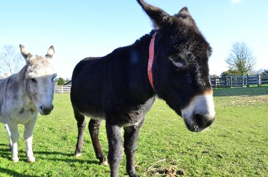 The Belmont Hotel: The Donkey Sanctuary