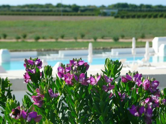 Masseria Bagnara Resort & Spa Photo