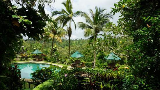 Alam Sari: Vue depuis la terrasse