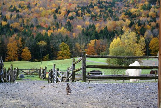 写真Vermont Icelandic Horse Farm枚