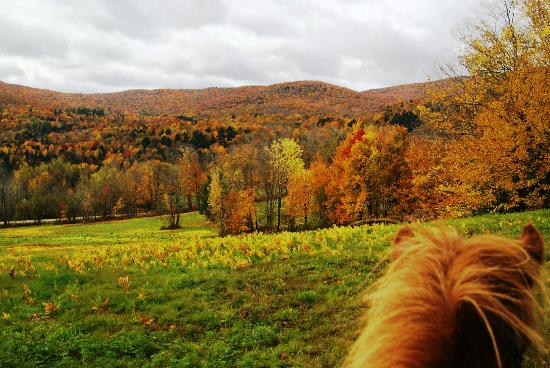 Vermont Icelandic Horse Farm: ...there is even smell in the color.