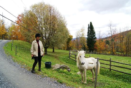 Vermont Icelandic Horse Farm: Carolyn with a colt