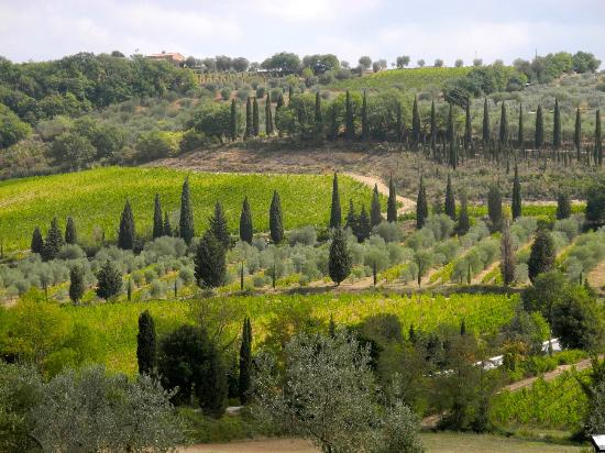 Best Tuscany Vineyard Tours