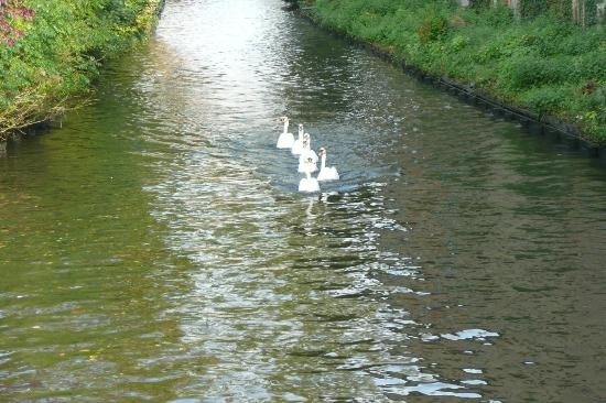 Bonobo Apart Hotel: Swans in central Bruges canal