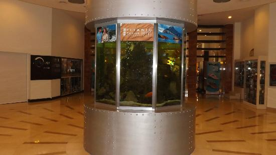 Titanic Beach Lara Hotel: the fish tank by the dining room