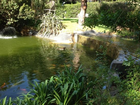 The Tarragon: the koi ponds