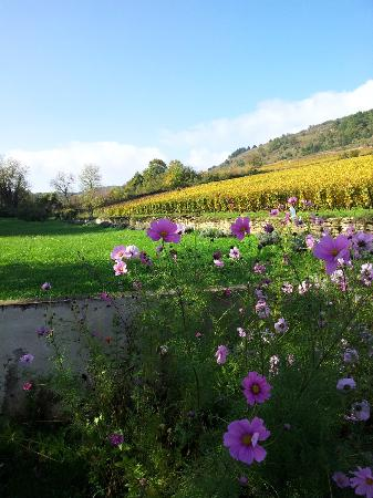 Au Clos Du Meix : View from garden onto the golden leaves of the Cote d'Or in autumn