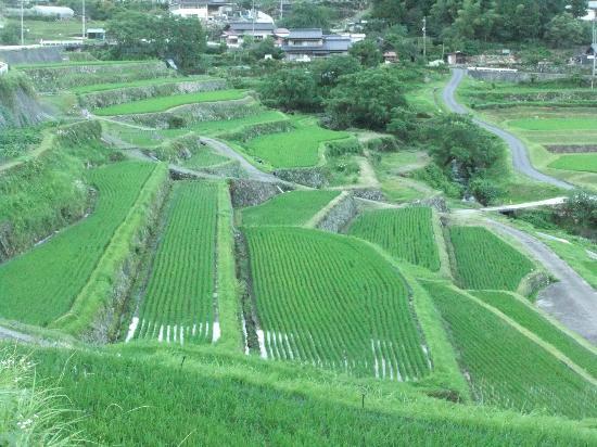 Ena, Japan: 棚田