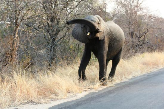 Kruger National Park (Nelspruit) - All You Need to Know