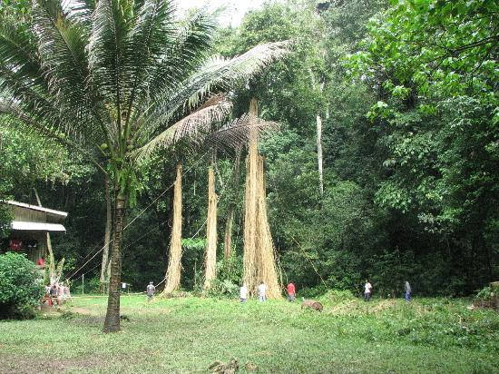 Gomantong Cave Sandakan: Rattan Ladders for collecting bird's nests from cave