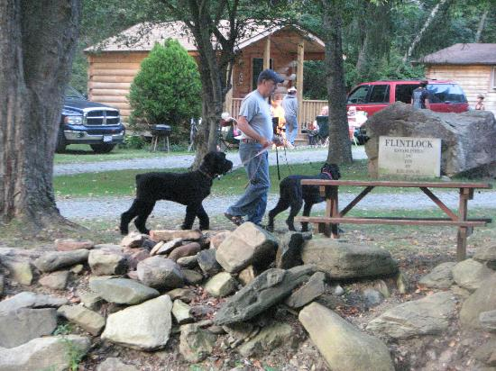 Flintlock Family Campground: Pet Friendly Campground