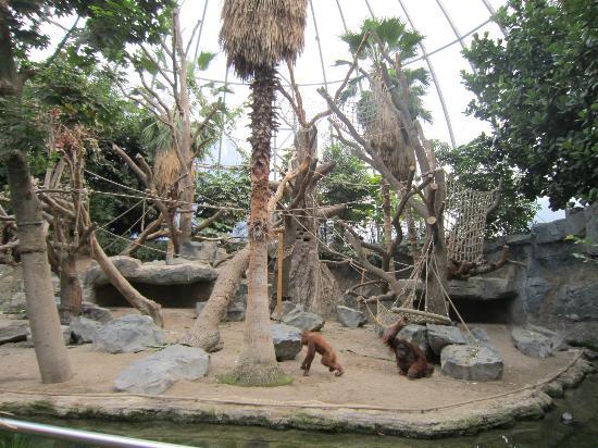 foto de hamburg zoo hamburgo orangutang house tripadvisor. Black Bedroom Furniture Sets. Home Design Ideas